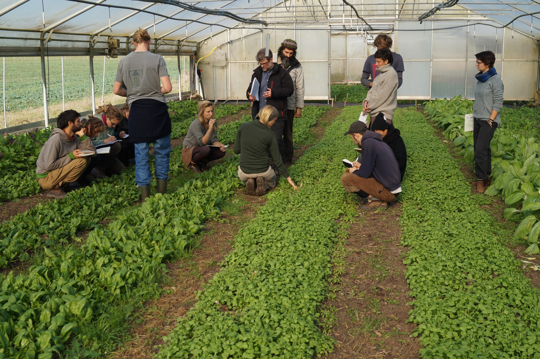 Selbstorganisierte Ausbildung solidarische Landwirtschaft