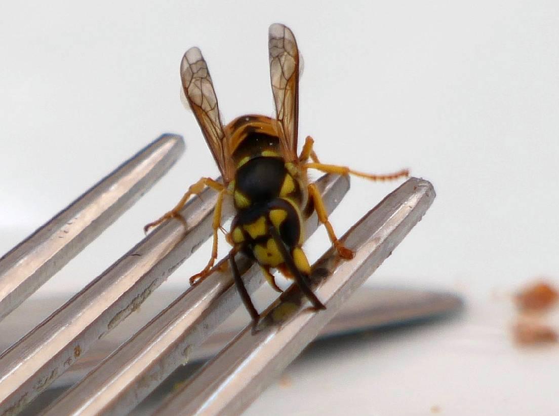 Wespen, Hornissen, Hummeln und Bienen schützen